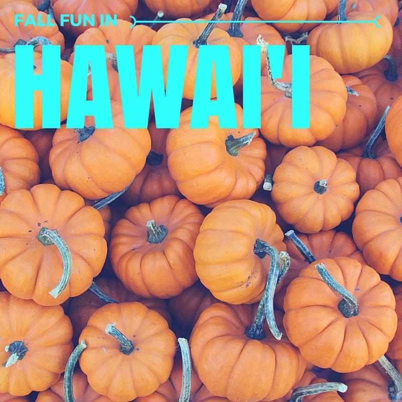28 Aloun Farms Pumpkin Patch 2015 Hours 100 Aloun