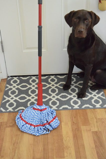 How I Keep My House Clean With Two Dogs Communikait