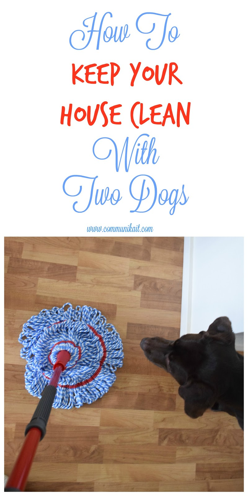 How To Keep My House Clean how i keep my house clean with two dogs - communikait