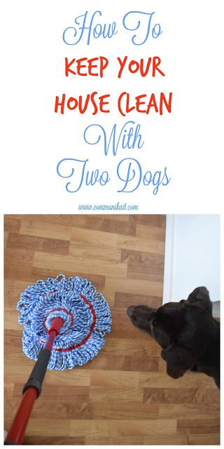 How To Keep My Dogs Fur Smelling Good