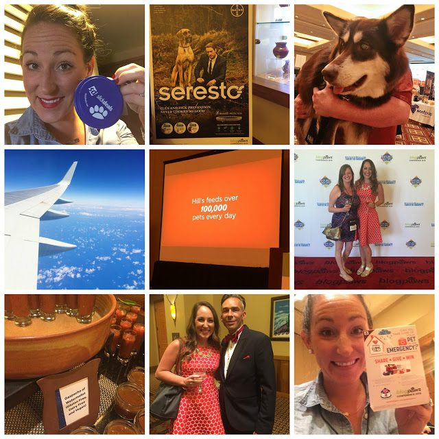 blogpaws 2016 phoenix
