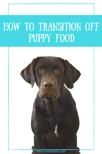 How To Transition Off Puppy Food #WellnessPet