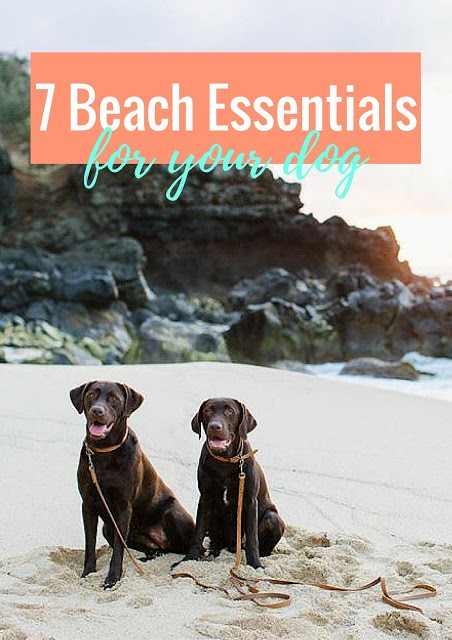 7 Beach Essentials For Your Dog