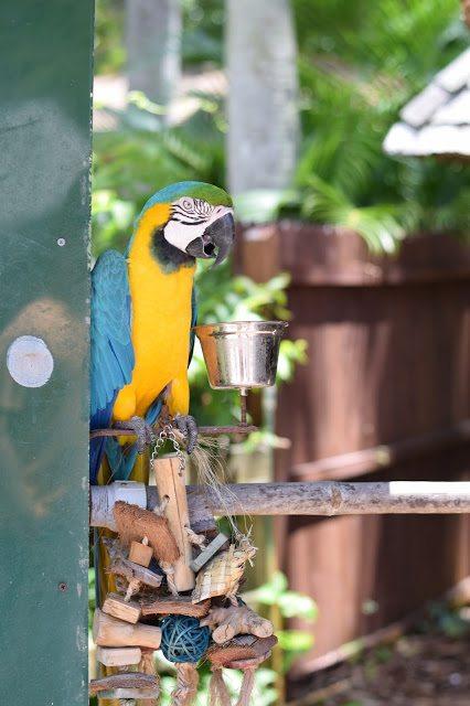 florida parrot sarasota